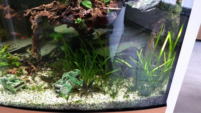 Mes plantes sont amorphes, et peu vivantes :-( Img_2016