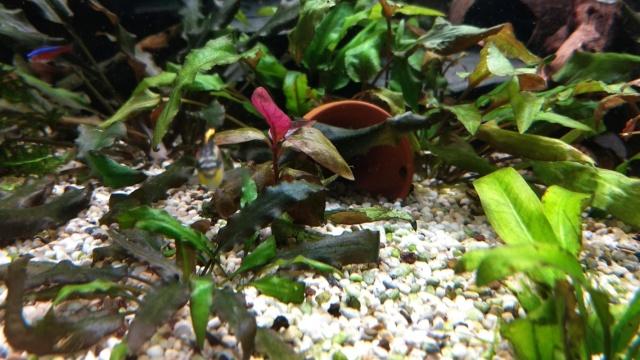 Mes plantes sont amorphes, et peu vivantes :-( Img_2018