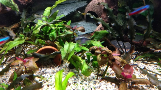 Mes plantes sont amorphes, et peu vivantes :-( Img_2019