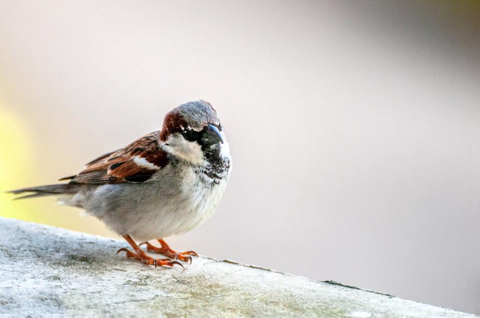 [Animaux] Une dernière Oiseau10
