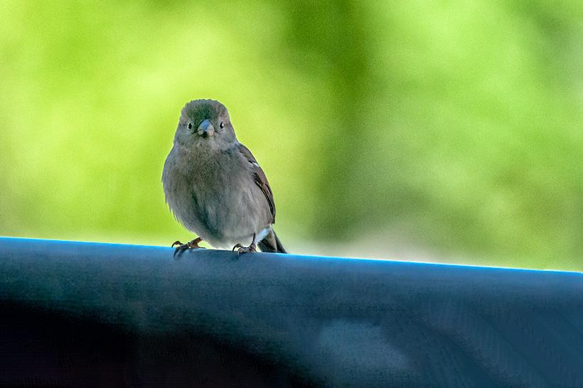[Animaux] Mini moi Oiseau11