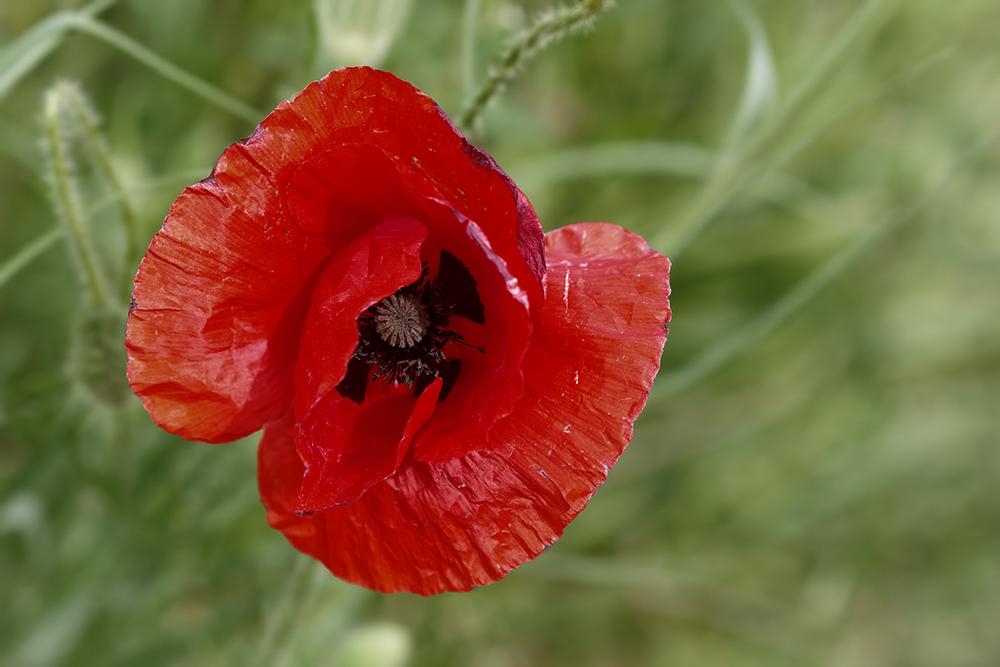 [Flore] Fleurs de la vallée de l'Orge 1 P1070610