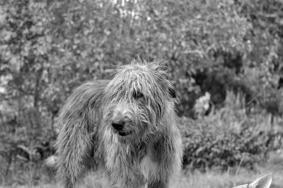 Les Shiba_ Inu sont les chiens les plus beaux :p 10428510