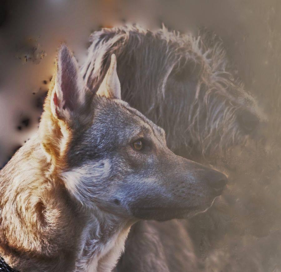 bétises de vos chiens , - Page 3 14779010