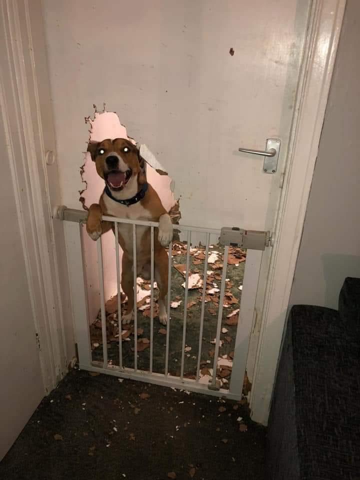 bétises de vos chiens , - Page 2 45650810