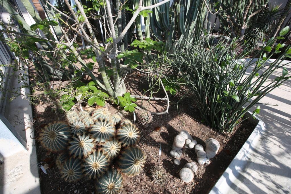 (Monaco) - Jardin exotique de Monaco  Img_3422