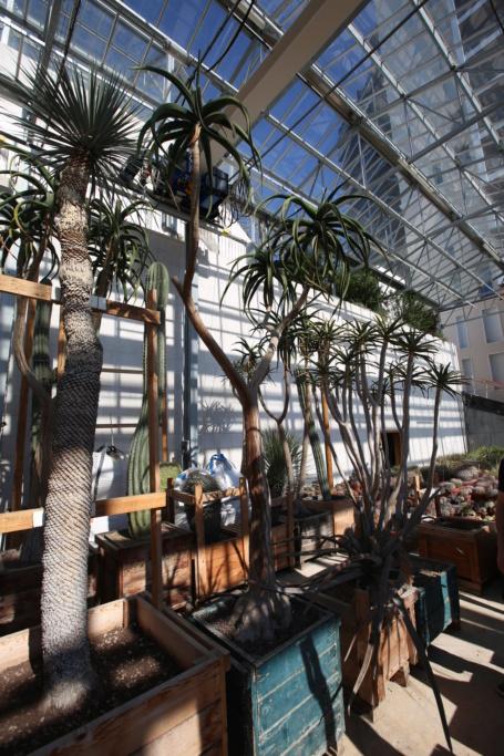 (Monaco) - Jardin exotique de Monaco  Img_3436