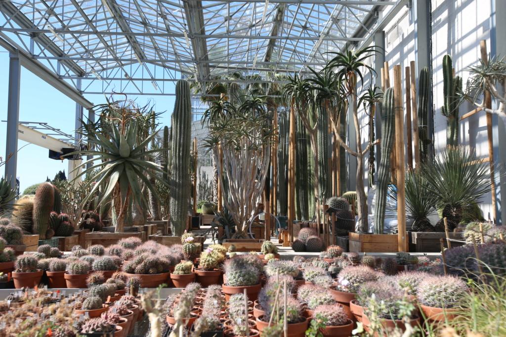 (Monaco) - Jardin exotique de Monaco  Img_3439