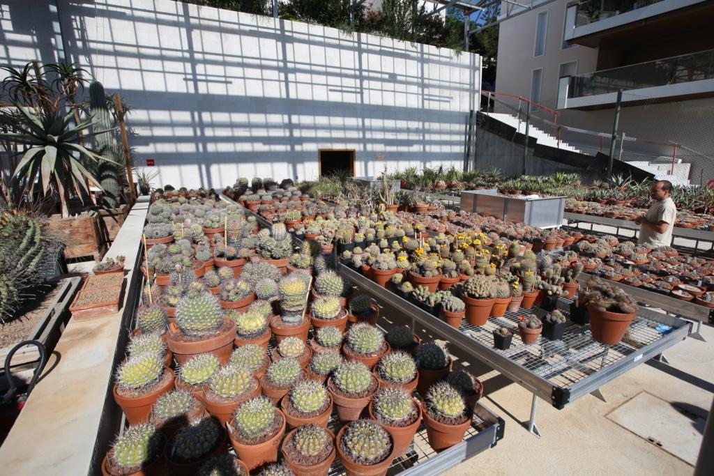 (Monaco) - Jardin exotique de Monaco  Img_3440