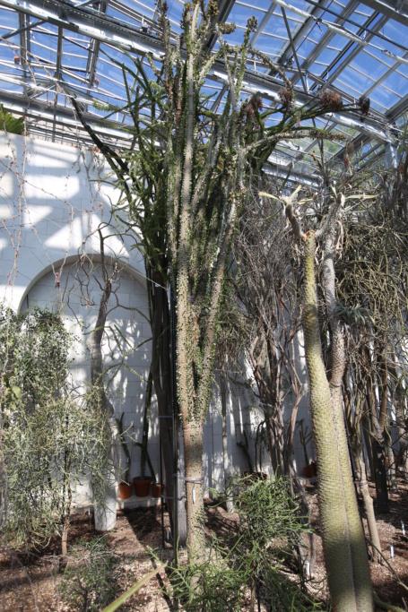 (Monaco) - Jardin exotique de Monaco  Img_3442