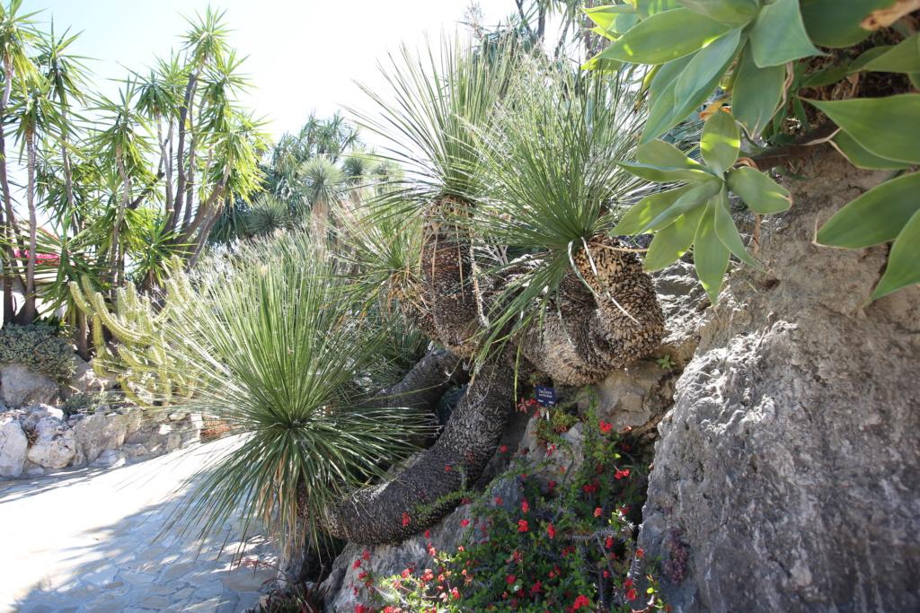 (Monaco) - Jardin exotique de Monaco  Img_3515