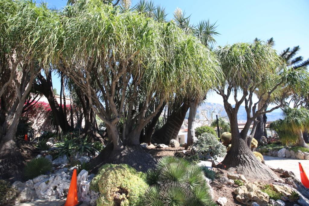 (Monaco) - Jardin exotique de Monaco  Img_3516