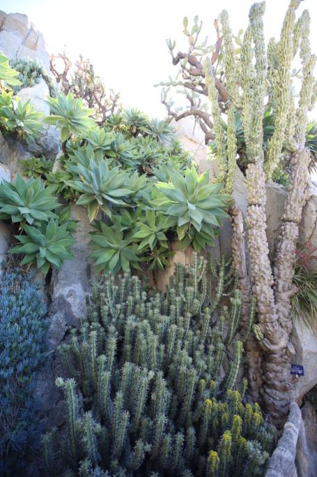 (Monaco) - Jardin exotique de Monaco  Img_3518