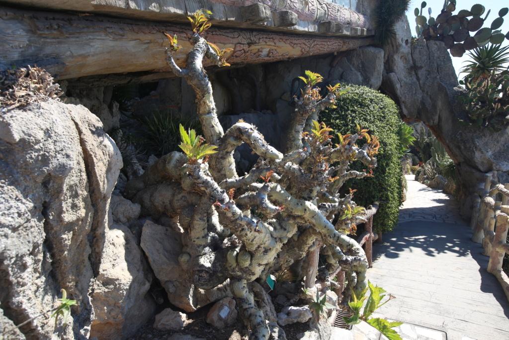 (Monaco) - Jardin exotique de Monaco  Img_3519