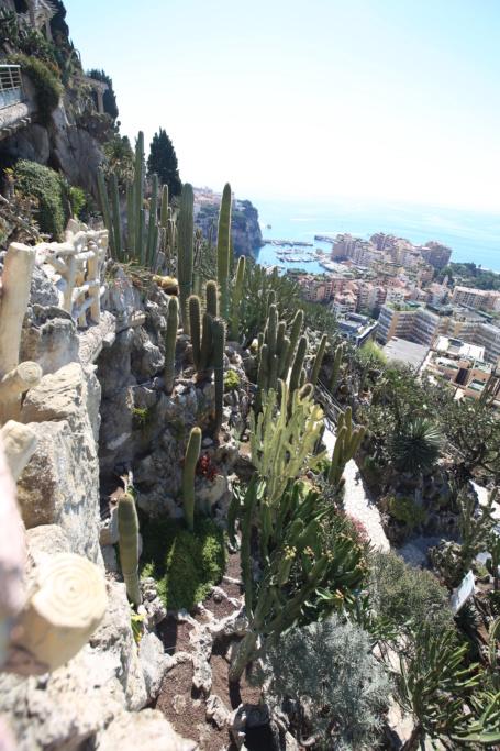 (Monaco) - Jardin exotique de Monaco  Img_3520
