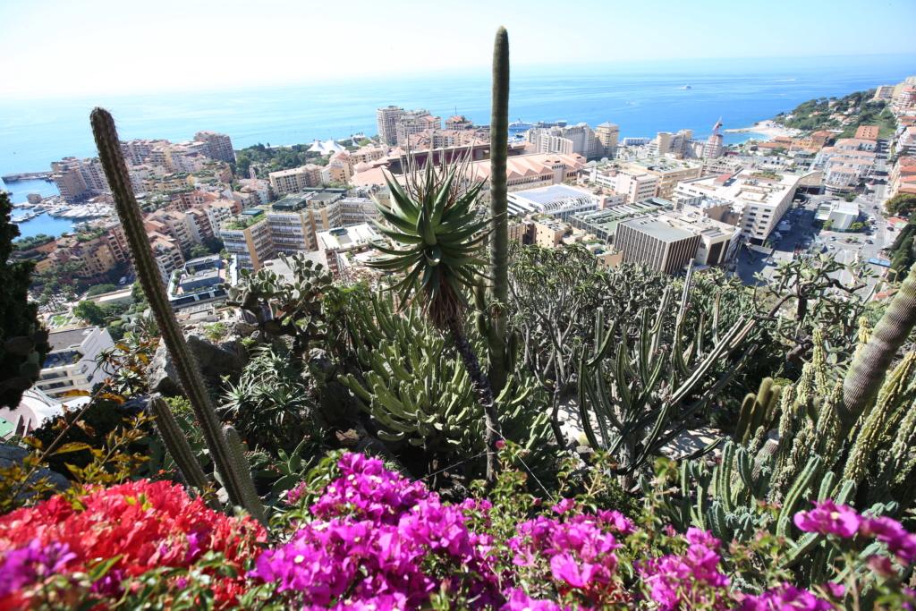 (Monaco) - Jardin exotique de Monaco  Img_3521