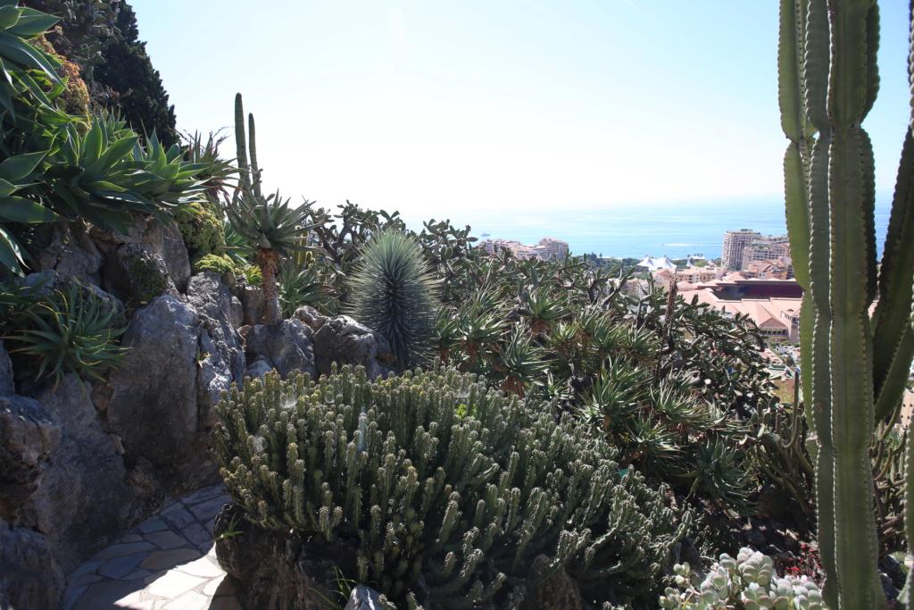 (Monaco) - Jardin exotique de Monaco  Img_3523