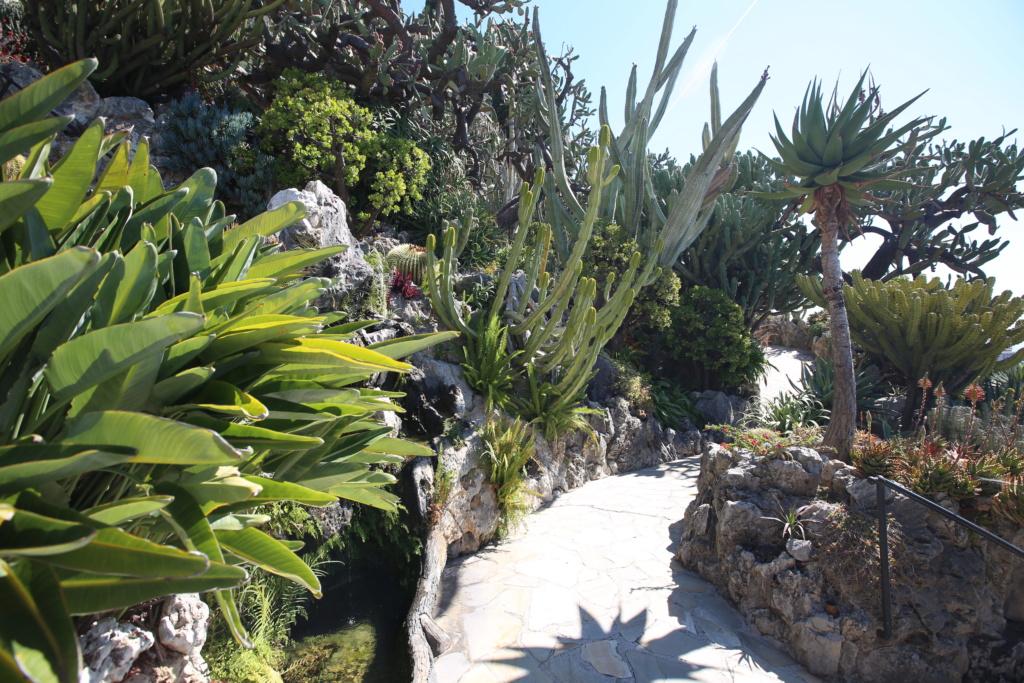 (Monaco) - Jardin exotique de Monaco  Img_3525