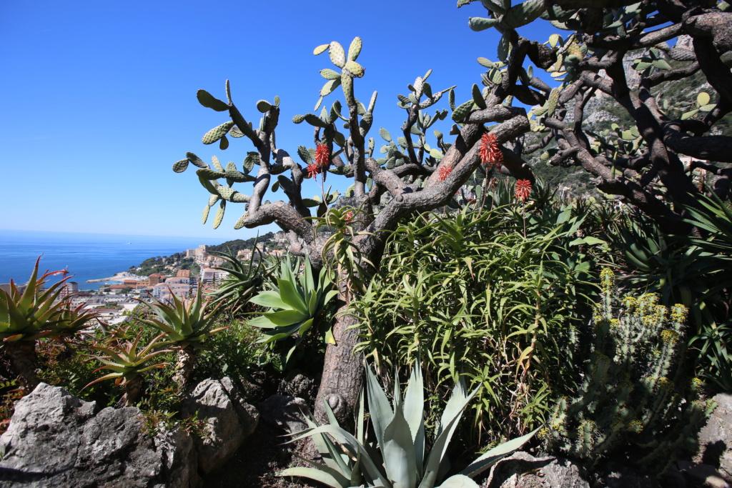 (Monaco) - Jardin exotique de Monaco  Img_3530