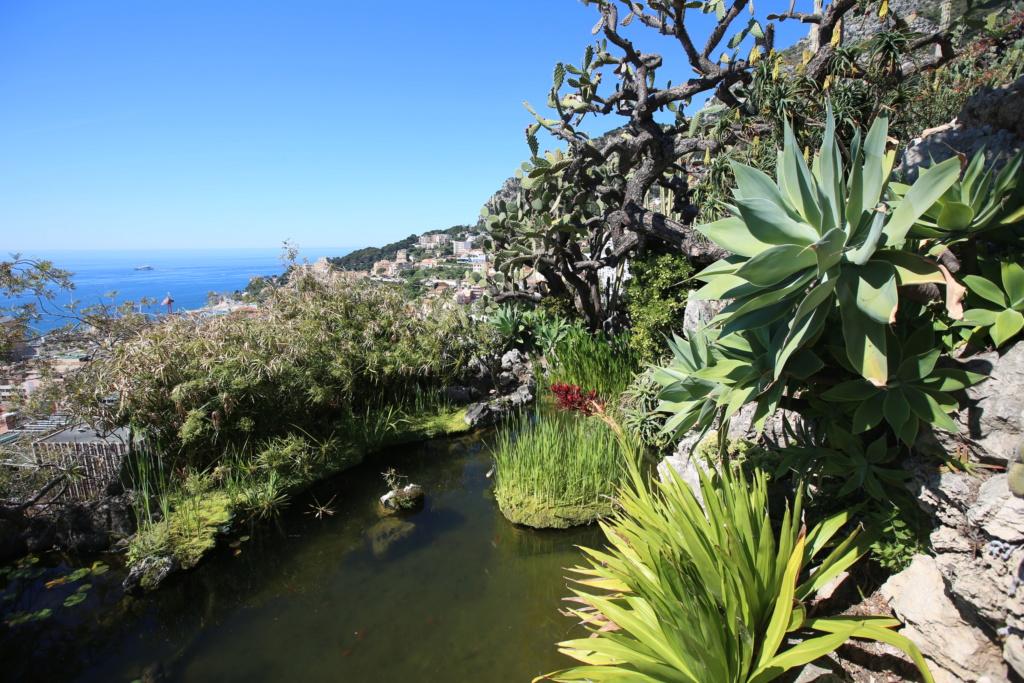 (Monaco) - Jardin exotique de Monaco  Img_3531