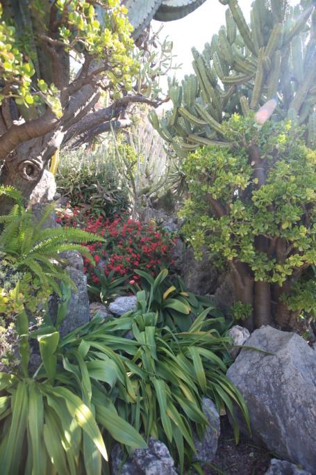 (Monaco) - Jardin exotique de Monaco  Img_3532