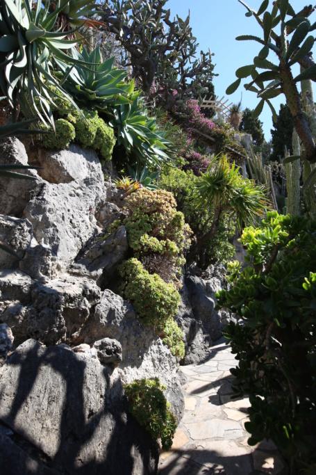 (Monaco) - Jardin exotique de Monaco  Img_3533