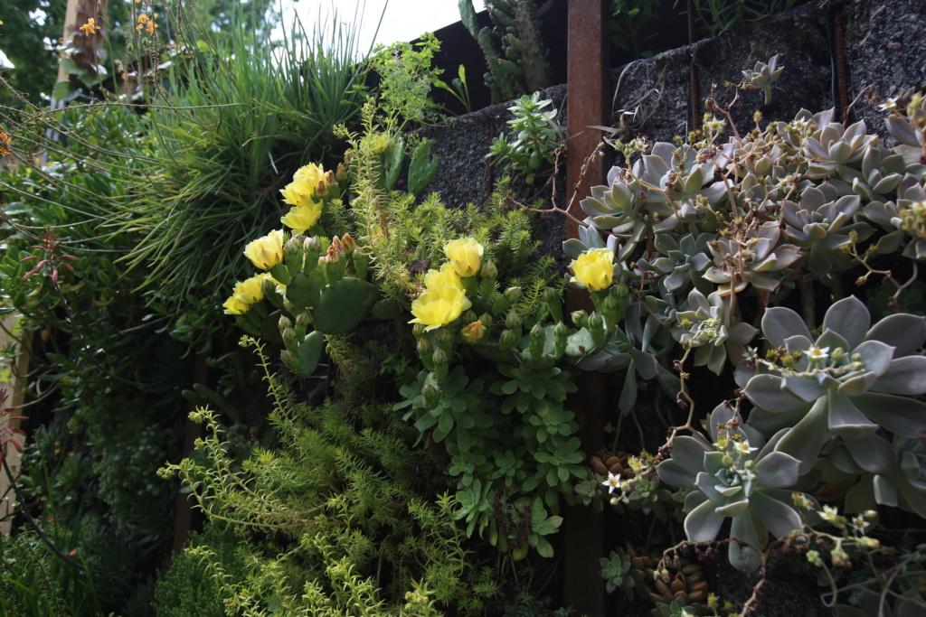 Mon mur végétal de succulentes Img_3614