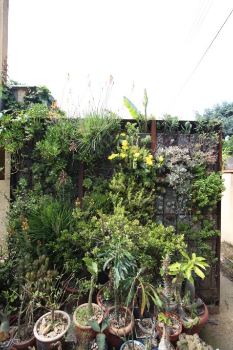 Mon mur végétal de succulentes Img_3615
