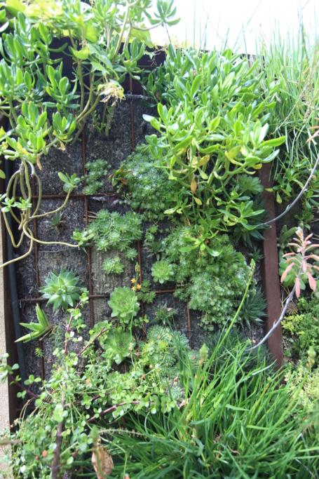 Mon mur végétal de succulentes Img_3616
