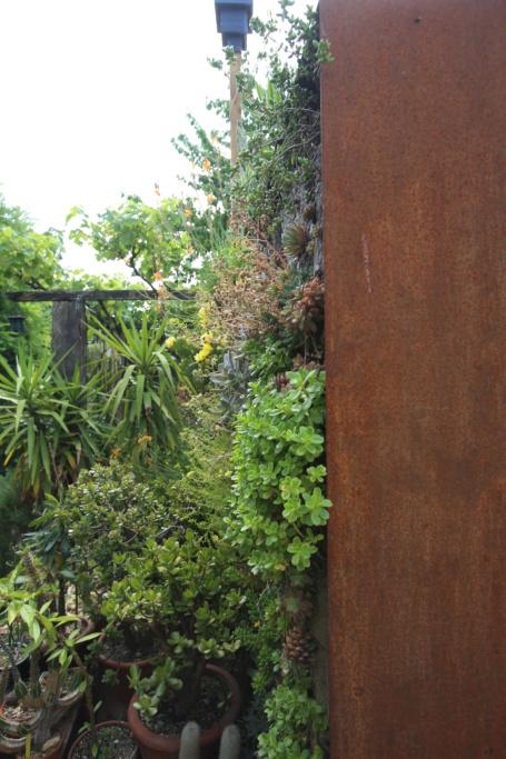 Mon mur végétal de succulentes Img_3617