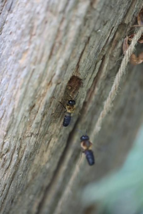 Identification abeilles Img_3810