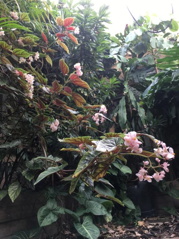 Gaëtan - Quelques ambiances de mon jardin - Page 2 Img_4711