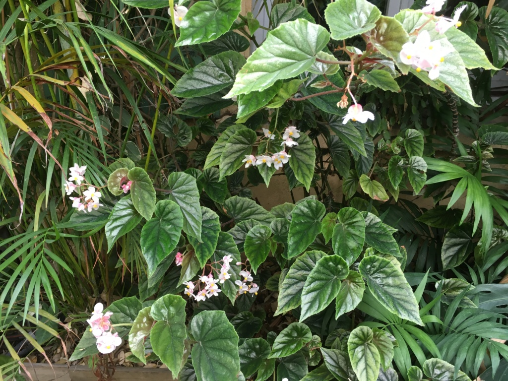 Gaëtan - Quelques ambiances de mon jardin - Page 2 Img_4712