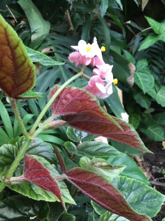 Gaëtan - Quelques ambiances de mon jardin - Page 2 Img_4713