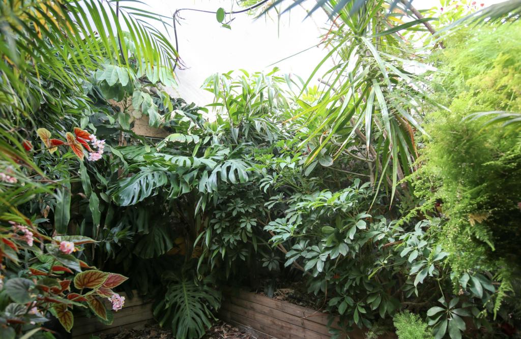 Gaëtan - Quelques ambiances de mon jardin - Page 2 Img_5227