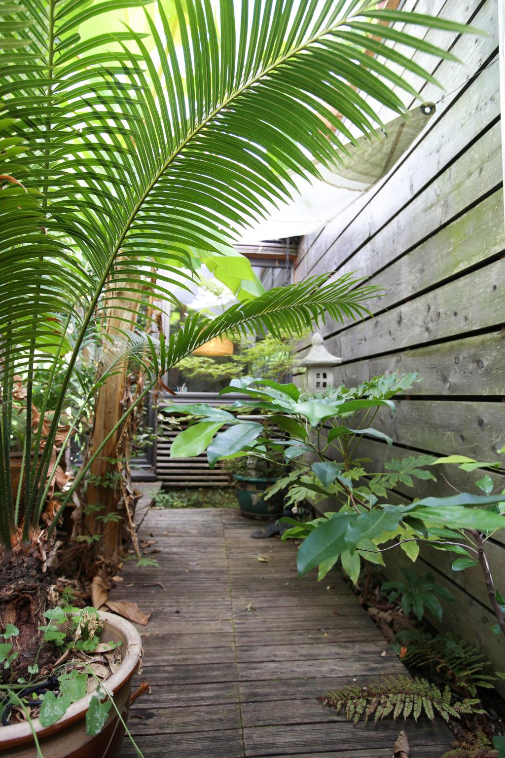 Gaëtan - Quelques ambiances de mon jardin - Page 2 Img_5228