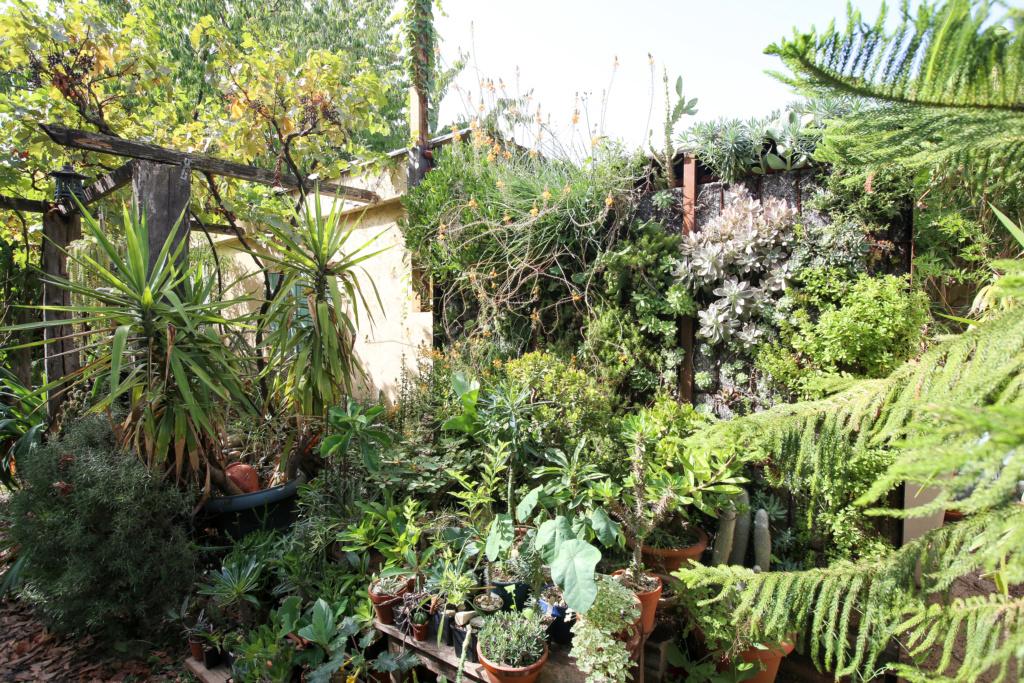 Mon mur végétal de succulentes Img_5230
