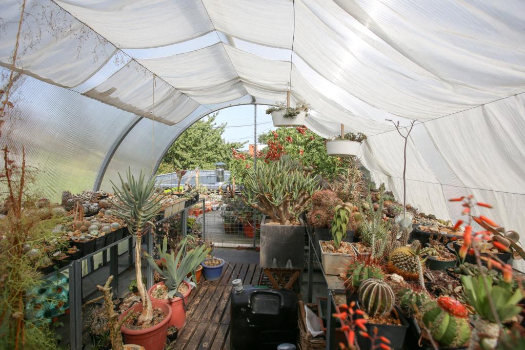 Gaëtan - Quelques ambiances de mon jardin - Page 2 Img_5233