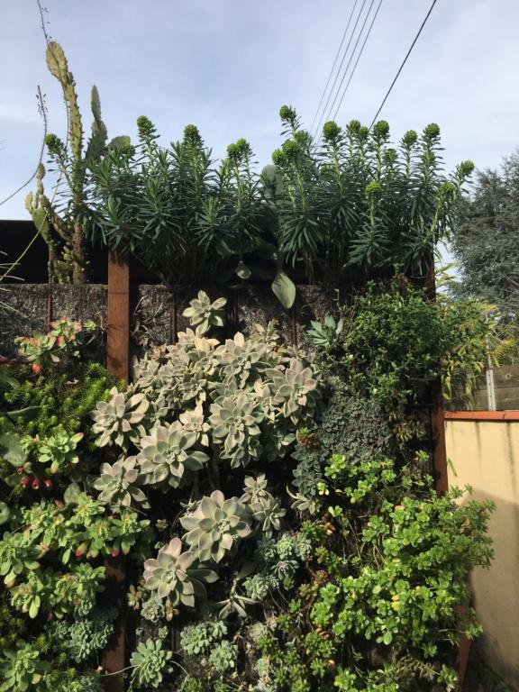 Euphorbia characias - Page 3 Img_5611