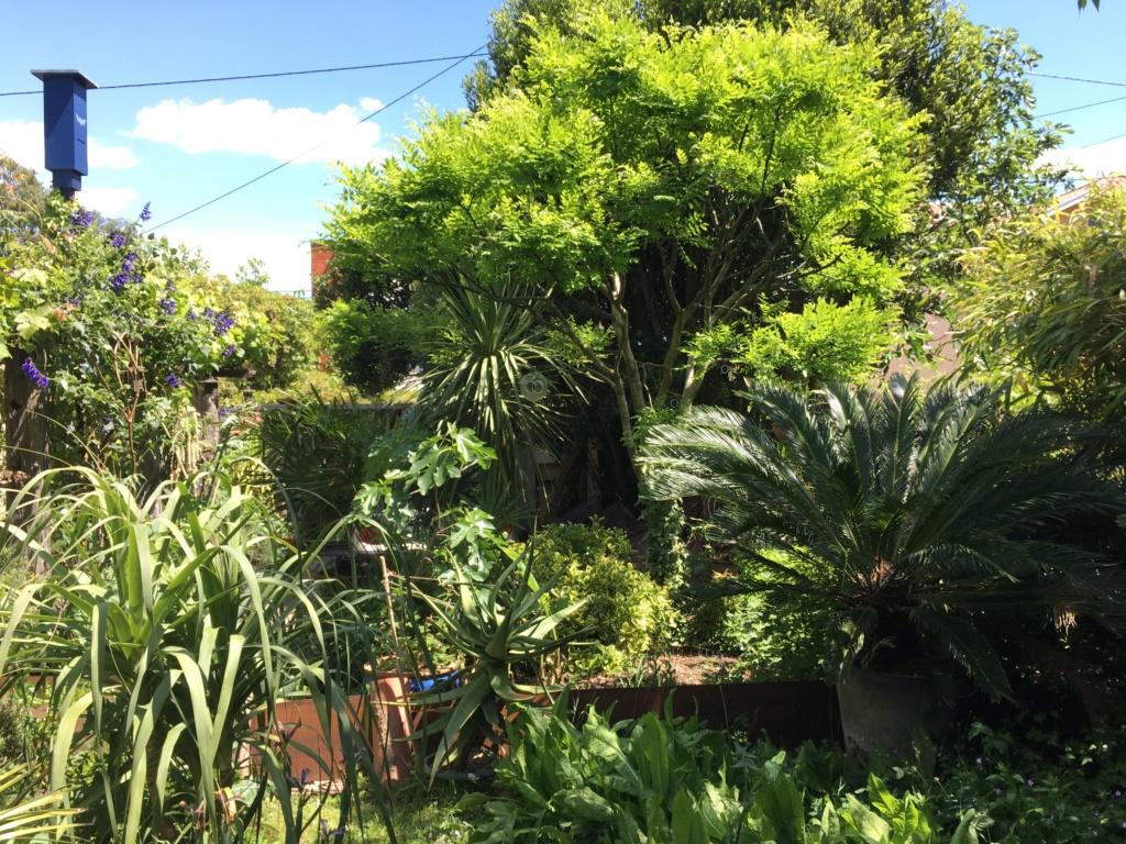 Gaëtan - Quelques ambiances de mon jardin - Page 3 Img_6112