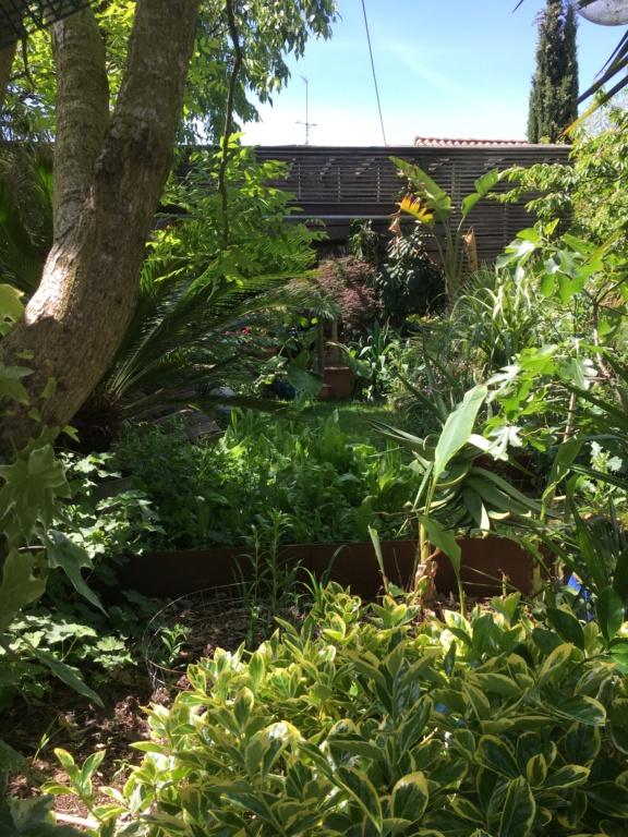 Gaëtan - Quelques ambiances de mon jardin - Page 3 Img_6113