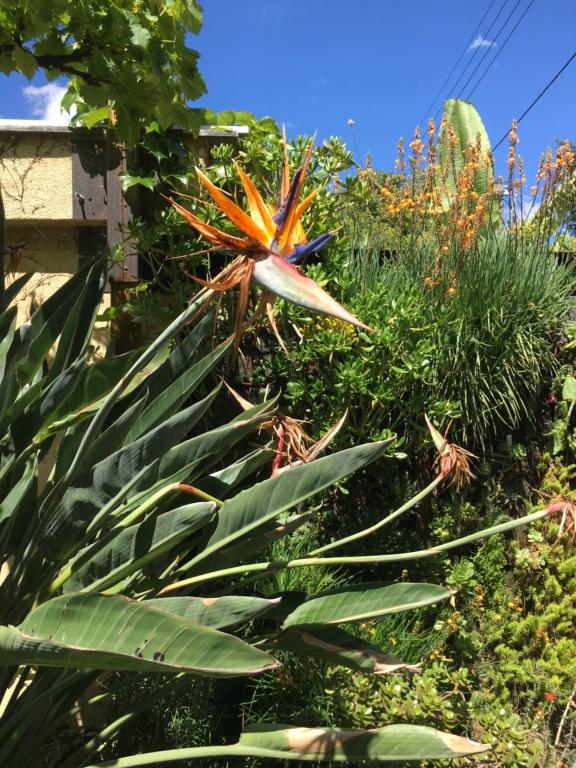 Gaëtan - Quelques ambiances de mon jardin - Page 3 Img_6114