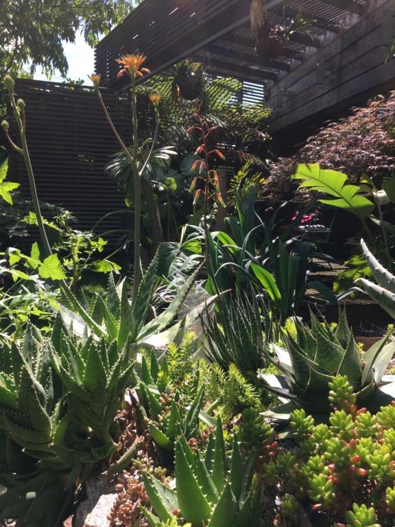 Gaëtan - Quelques ambiances de mon jardin - Page 3 Img_6115