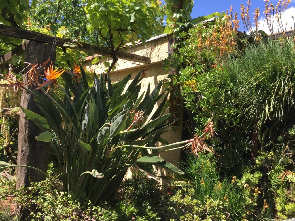 Gaëtan - Quelques ambiances de mon jardin - Page 3 Img_6116
