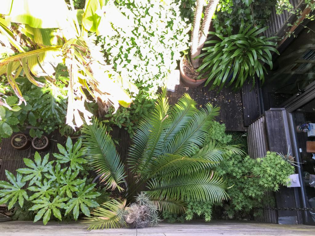 Gaëtan - Quelques ambiances de mon jardin - Page 3 Img_6117