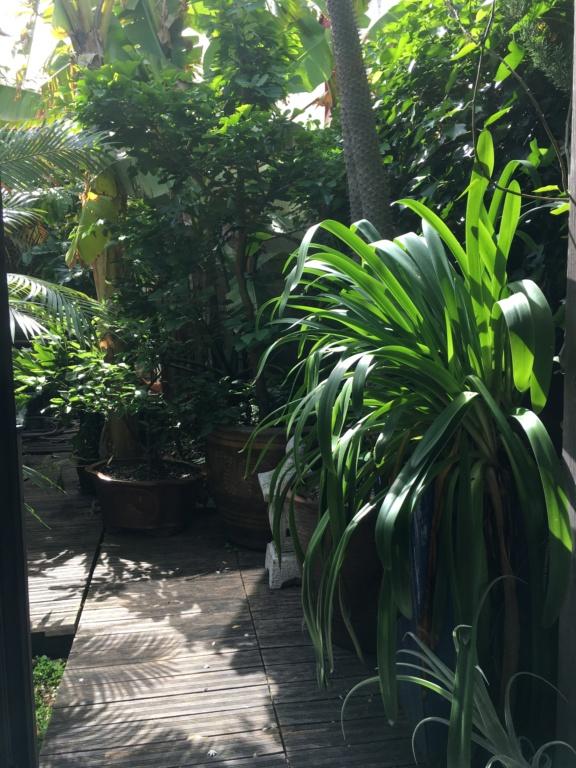 Gaëtan - Quelques ambiances de mon jardin - Page 3 Img_6212