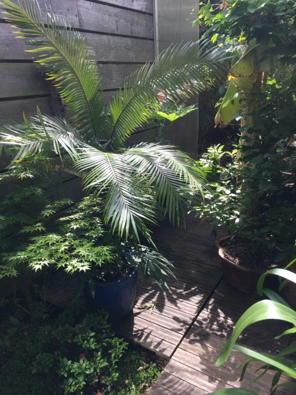 Gaëtan - Quelques ambiances de mon jardin - Page 3 Img_6213