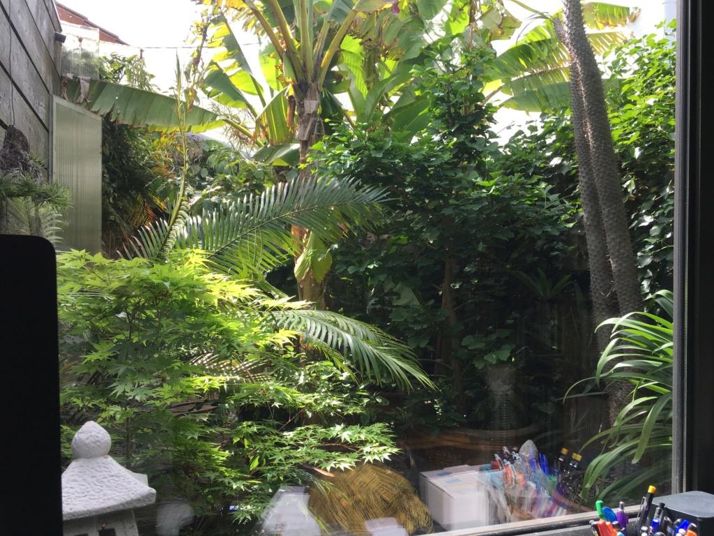 Gaëtan - Quelques ambiances de mon jardin - Page 3 Img_6214
