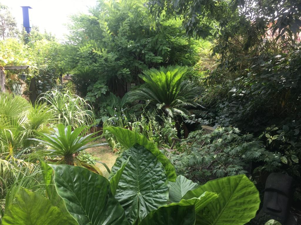 Gaëtan - Quelques ambiances de mon jardin - Page 3 Img_6613
