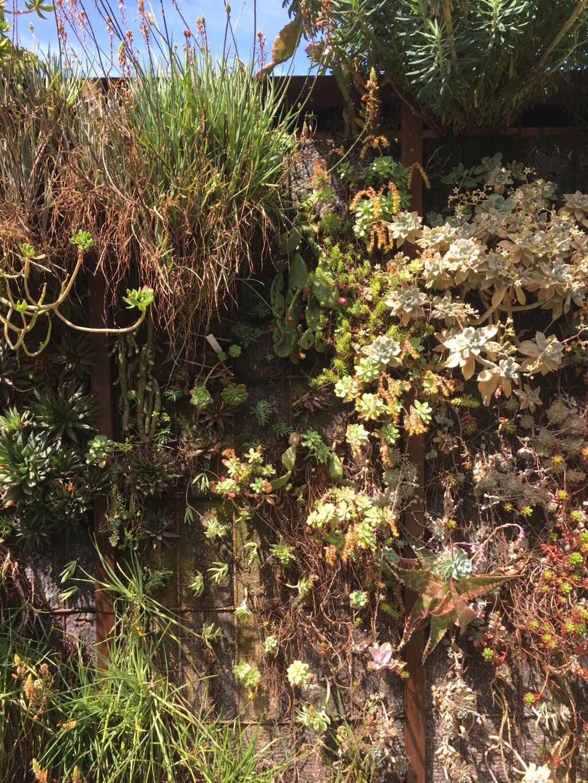 Mon mur végétal de succulentes - Page 2 Img_8620